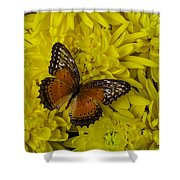 Orange Butterfly On Yellow Mums Shower Curtain