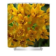 Orange Butterfly Weed Shower Curtain by Shelli Fitzpatrick