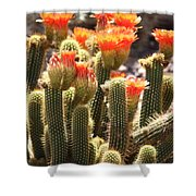 Orange Cactus Blooms Shower Curtain