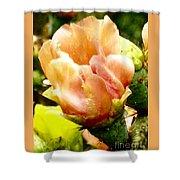 Orange Cactus Blossom Shower Curtain