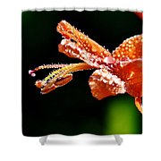 Orange Cape Honeysuckle Bush Blossom Shower Curtain