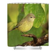 Orange Crowned Warbler Shower Curtain