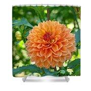 Orange Dahlia Master Gardeners Art Collection Baslee Troutman Shower Curtain