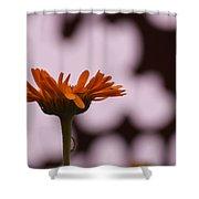 Orange Daisey Shower Curtain