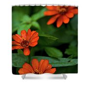 Orange Daisey's Shower Curtain