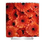 Orange Daisies Shower Curtain