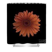 Orange Daisy Front Shower Curtain