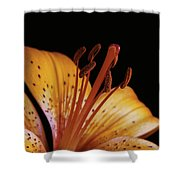 Orange Day Lilly On Black Shower Curtain