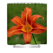 Orange Day Lily No.2 Shower Curtain