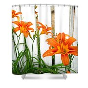 Orange Daylily At Colonial Williamsburg Shower Curtain