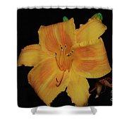 Orange Daylily Flower Blossom In A Garden Shower Curtain