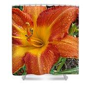 Orange Daylily With Dew Shower Curtain