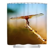 Orange Dragonfly Wings I Shower Curtain