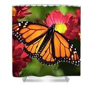 Orange Drift Monarch Butterfly Shower Curtain