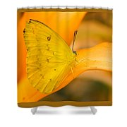 Orange Emigrant Butterfly Shower Curtain