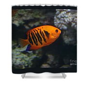 Orange Fish Shower Curtain