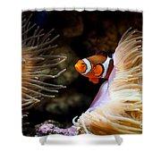 Orange Fish In Sea Anemones Shower Curtain