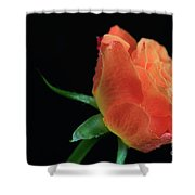 Orange Flame Rose Shower Curtain by Tracy Hall