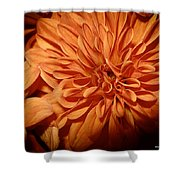 Orange Flower Enhanced 2016 Shower Curtain