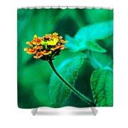 Orange Flower II Shower Curtain