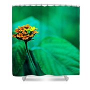 Orange Flower Iv Shower Curtain