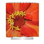 Orange Flower Macro Shower Curtain