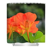 Orange Flowers On A Plant Shower Curtain