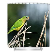 Orange-fronted Parakeet Shower Curtain