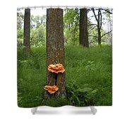 Orange Fungi On A Tree Shower Curtain