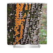 Orange Fungus Shower Curtain