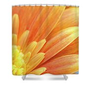 Orange Gerbera Petals Shower Curtain