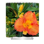 Orange Gladiola Flower And Buds Shower Curtain