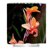 Orange Gladiolus Shower Curtain