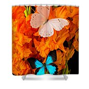 Orange Glads With Two Butterflies Shower Curtain