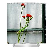 Orange Hawkweed Over Gray Muslin Shower Curtain