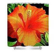 Orange Hibiscus Shower Curtain