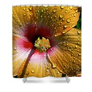 Orange Hibiscus II With Water Droplets Shower Curtain