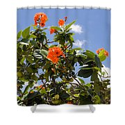 Orange Hibiscus With Fruit On The Indian River In Florida Shower Curtain