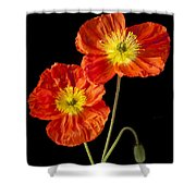 Orange Iceland Poppies Shower Curtain by Garry Gay