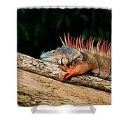 Orange Iguana Close Up Shower Curtain