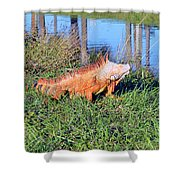 Orange Iguana Shower Curtain