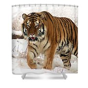Orange In Winter Shower Curtain