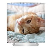 Orange Kitten Shower Curtain
