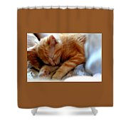 Orange Kitten Sleeping In Silk And Satin Shower Curtain