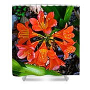 Orange Trumpet Flowers At Pilgrim Place In Claremont-california Shower Curtain