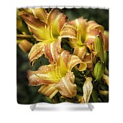 Orange Lilies Portrait Shower Curtain