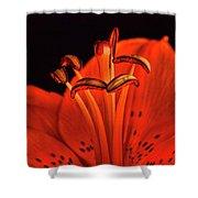 Orange Lilly  Shower Curtain