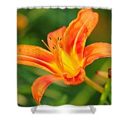 Orange Lily Shower Curtain