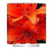 Orange Lily Closeup Digital Painting Shower Curtain