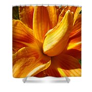 Orange Lily Flower Art Print Summer Lilies Baslee Shower Curtain
